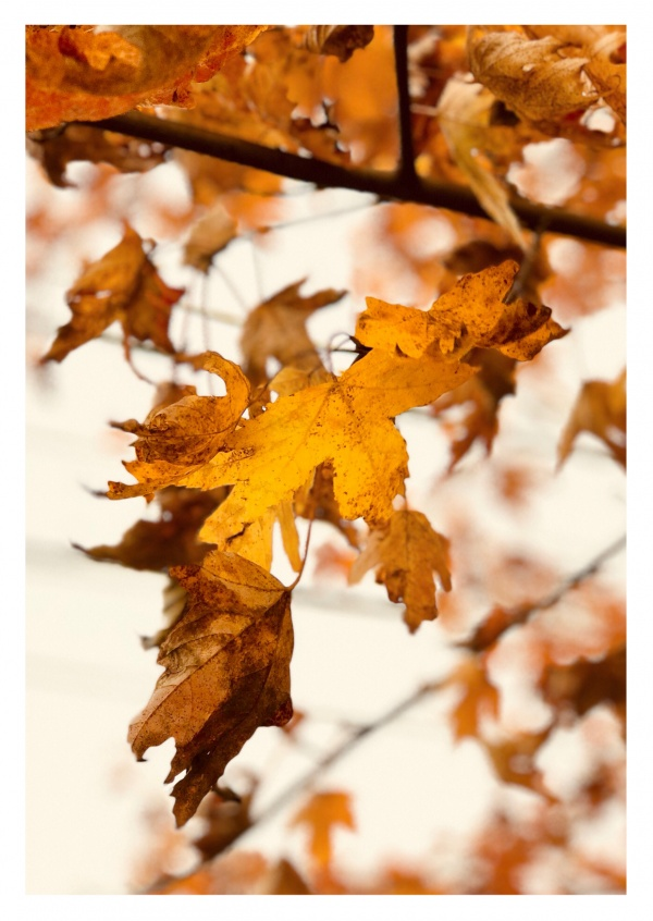 photo leaves in autumn
