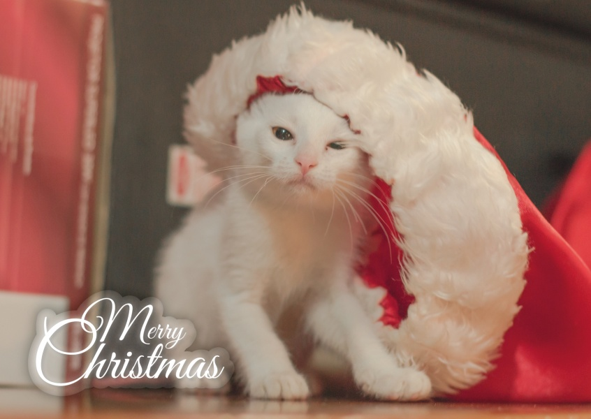 merry christmas kitten with christmas hat on postcard greeting card