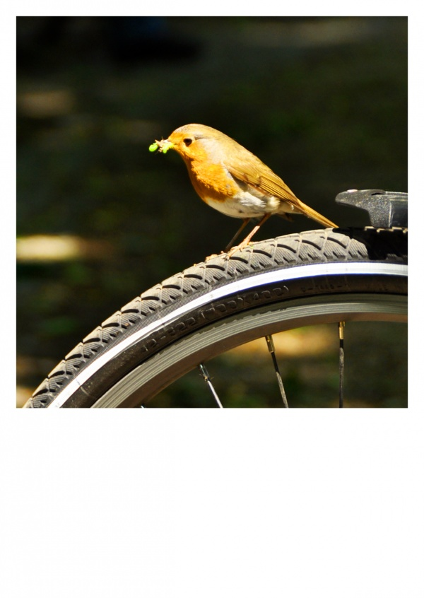 bird on bycicle