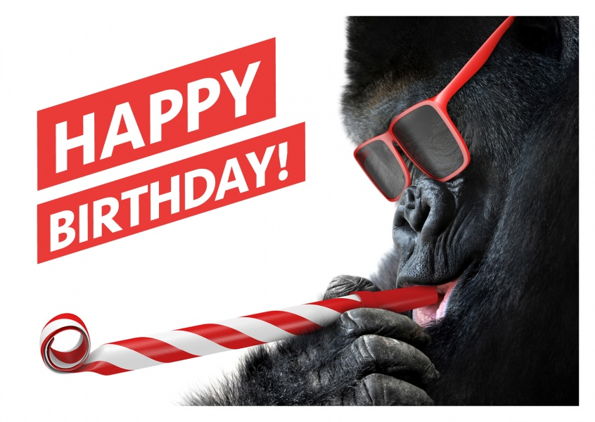 Funny photo of a Gorilla with red sunglasses and whistle
