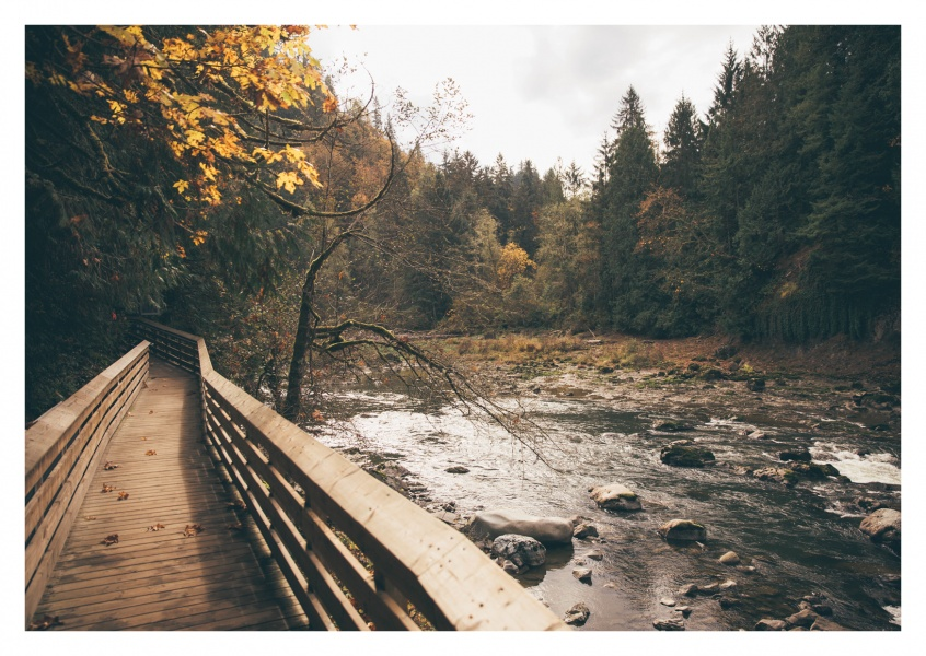 Hiking trail next to river in the forest