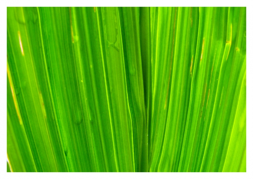 green leaf detai