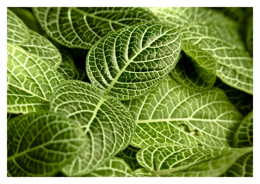 green leaves with pattern