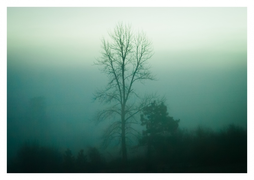 mystic landscape with trees