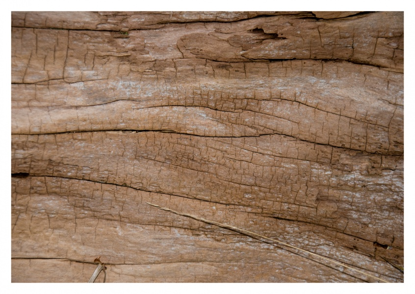 tree wood detail