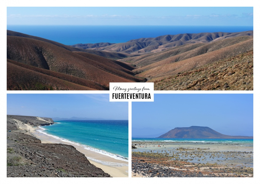 Fuerteventuras beach landscape and varied flora