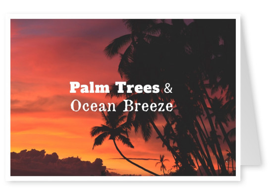 postcard saying Palm trees & ocean breeze