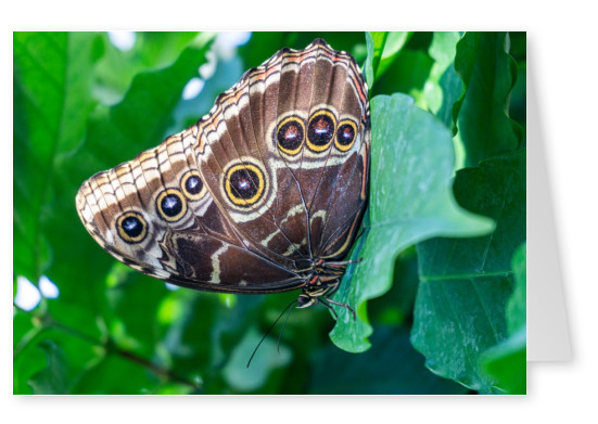 James Graf photo butterfly