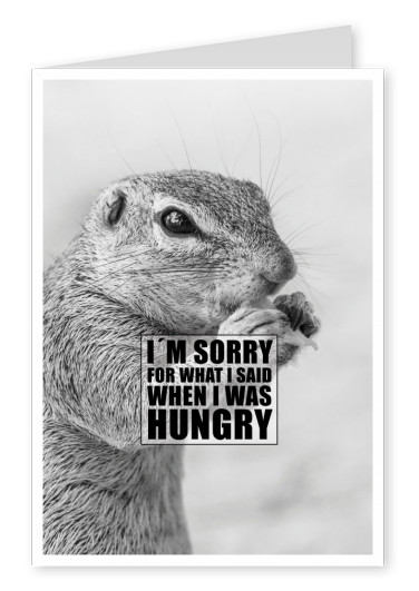 squirrel quote sorry