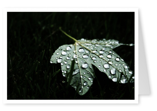 Leaf with big rain drops