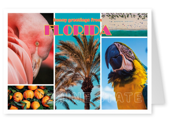 photocollage Florida retro lettering, parot, flamingo, oranges, beach