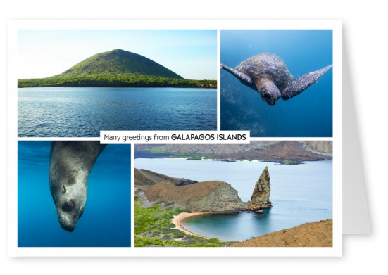 photocollage of  Galapagos islands naute & animals