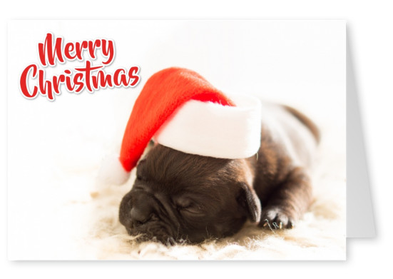 Writing Merry Christmas and puppy with Christmas cap