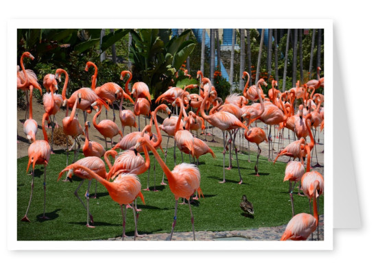 Photo of three Flamingos