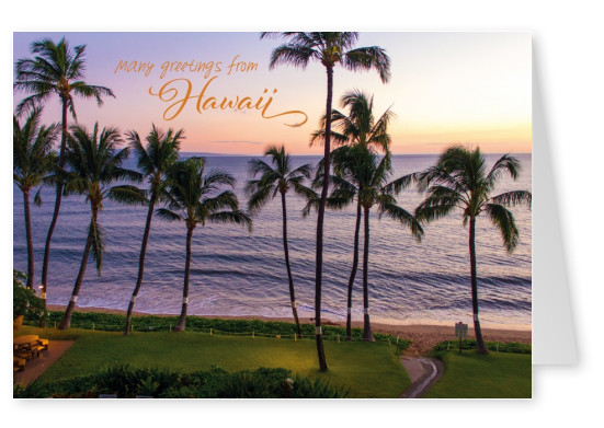 photo of sunset on hawaii with palm and ocean