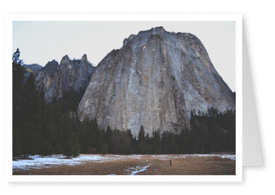 huge rock with trees