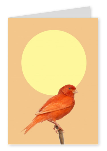 Kubistika red bird with yellow sun in the background