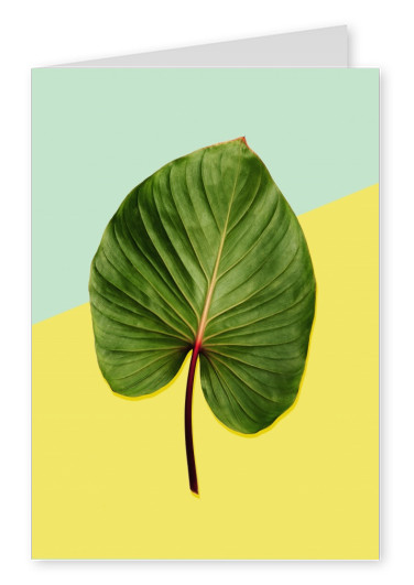 Kubistika leaf on yellow background