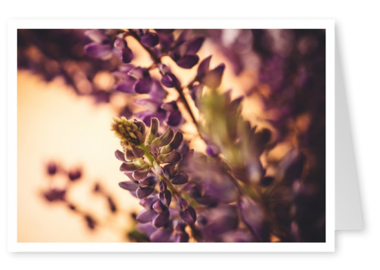 Lilac flower in the sun