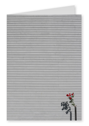 photo Marcus Cederberg minimalpics Single Rose