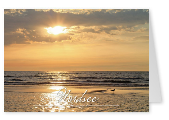 Photo of a Northern Sea beach at sundown in pink light–mypostcard