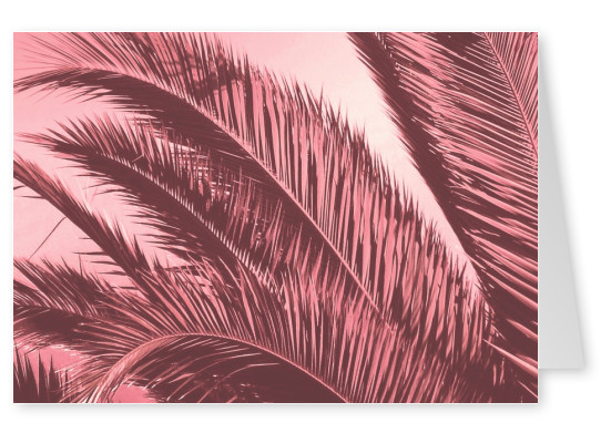 Ballack Art House pink palms