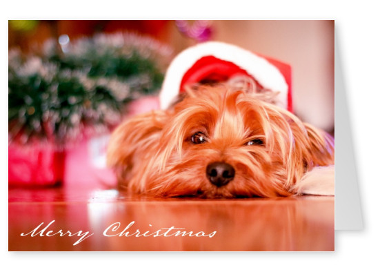 Christmas card with a picture of a dog