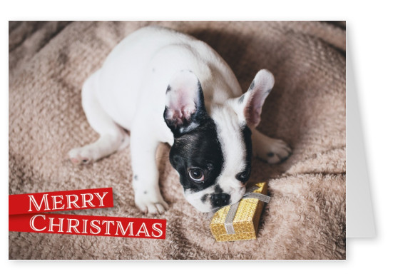 Christmas greeting card with a picture of dog