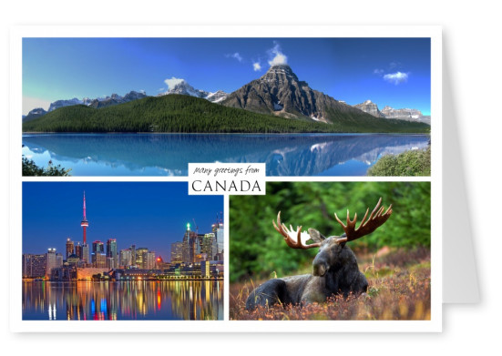 Three photos of canada – nature woods sea moose city