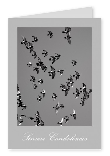 photo swarm of birds on grey ground