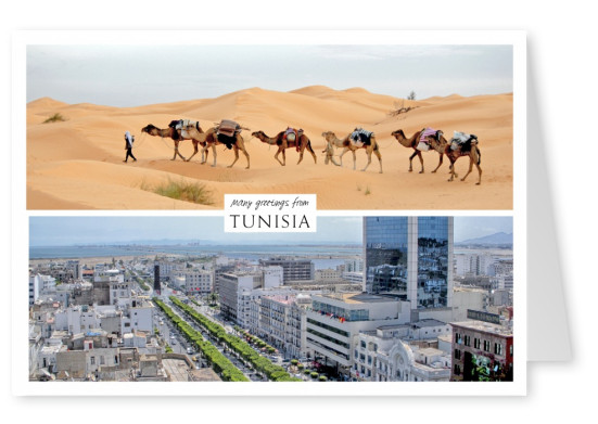 two photos of tunisia – camels in the desert andd Tunis