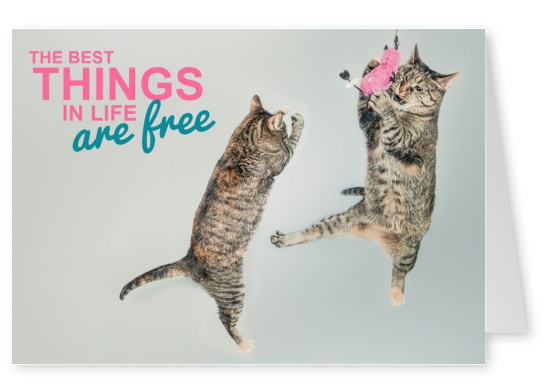 cats quote postcard