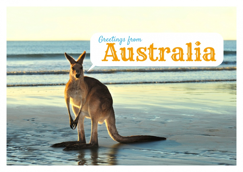kangaroo on the beach postcard