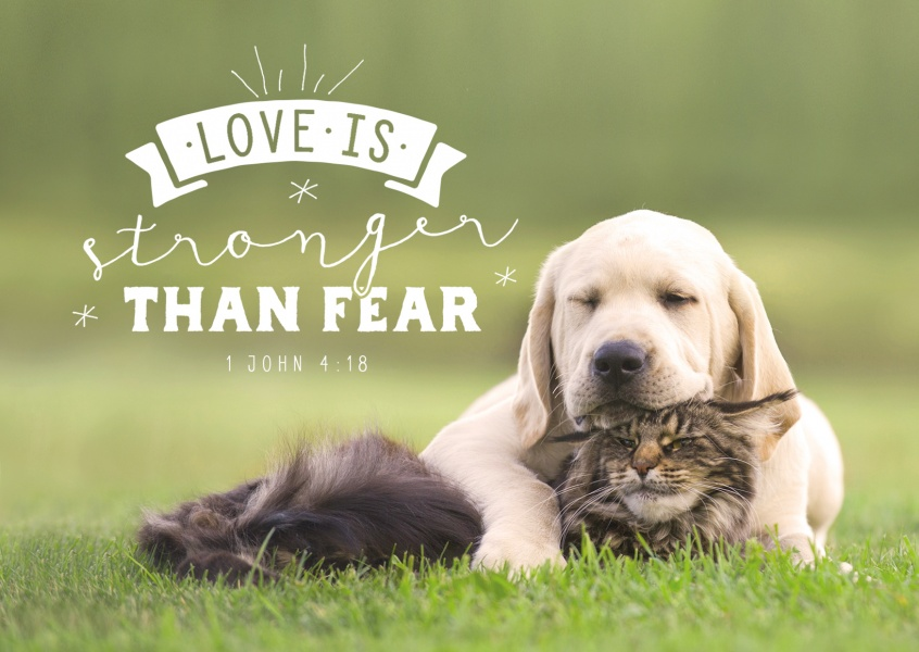 postcard Love is stronger than fear