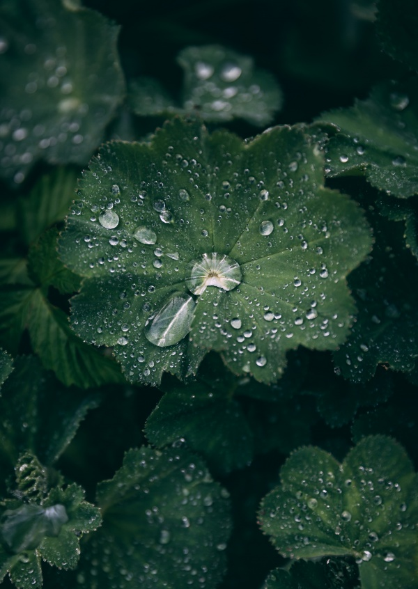 Photograph of raindrops
