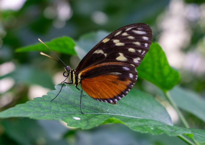 James Graf Foto Schmetterling