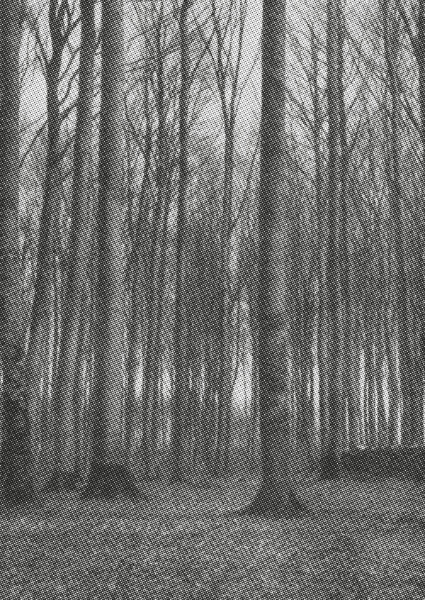 black and white grainy photo forest