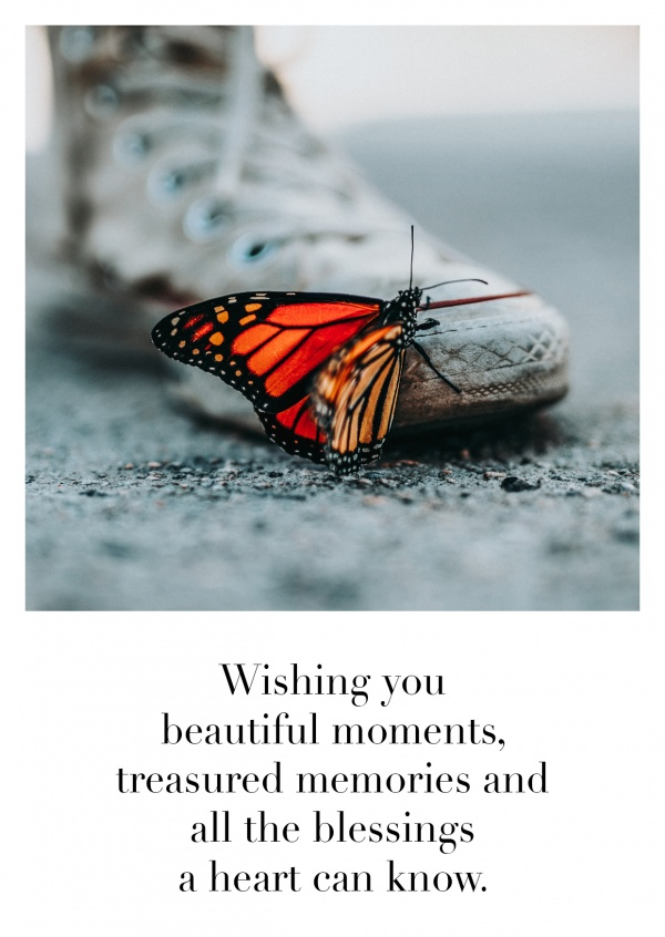 photo butterfly sitting on a shoe