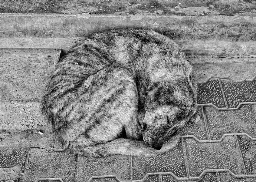 postcard  Sleeping Dog