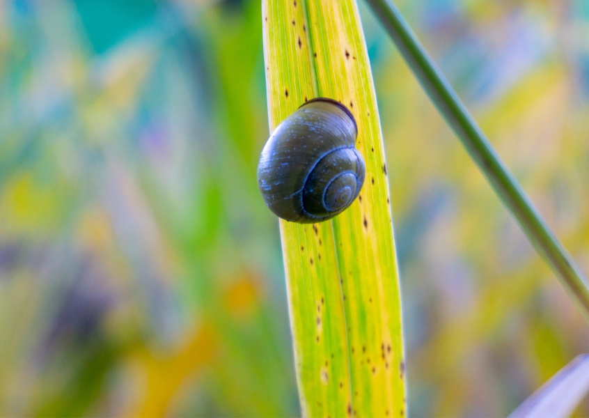 James Graf photo snail