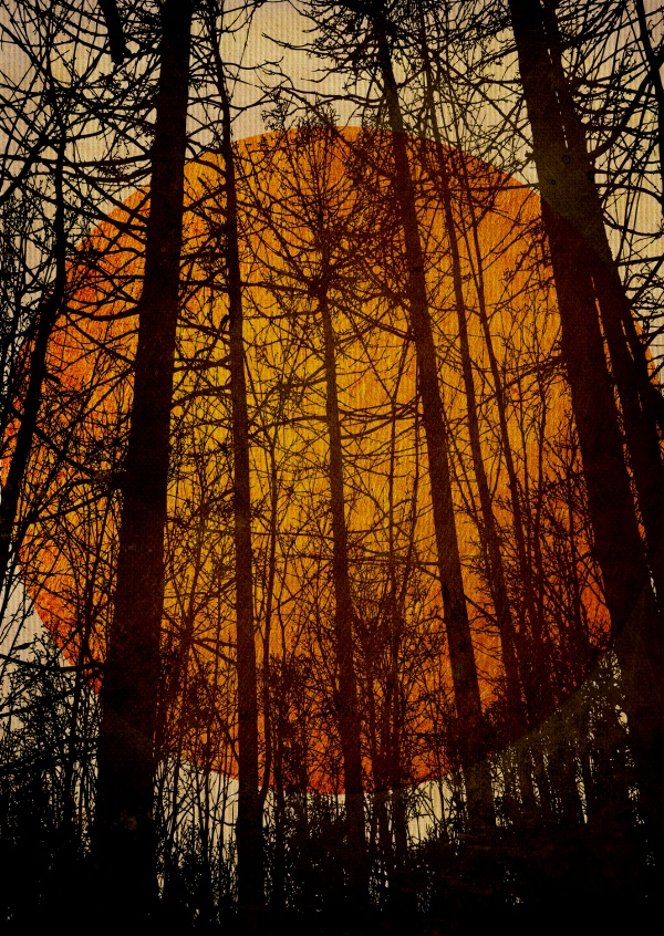 Kubistika black trees with red sun