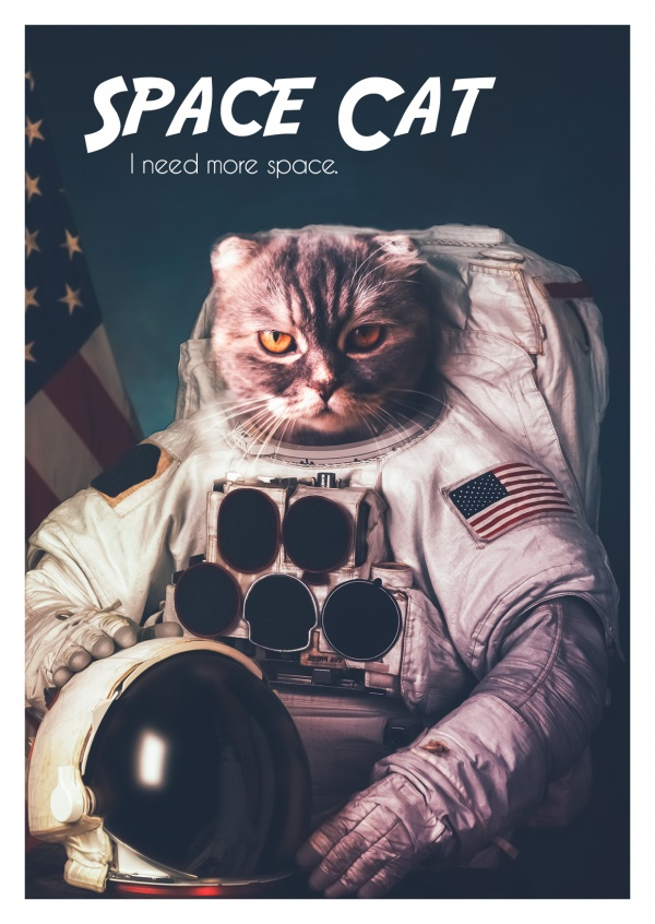 Photocollage of a cat in NASA space suit, space cat–mypostcard