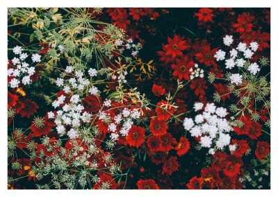 white and red flowers from above