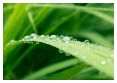 photo green leaf mornind dew