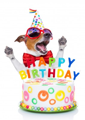 dog with sunglasses and party hat and birthday cake with happy birthday candles postcard