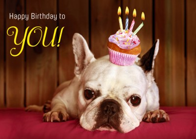 dog muffin candles happy birthday postcard greeting card
