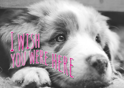 sweet dog black and white postcard with quote