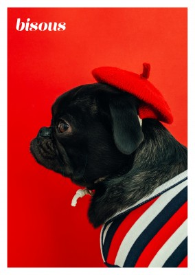 photo cute little dog dressed in French colours
