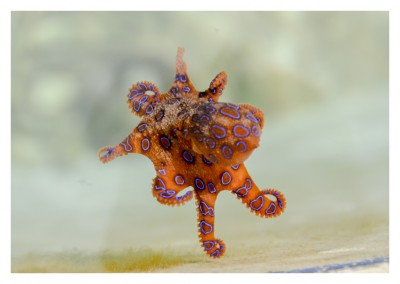 Photo of a little octopus