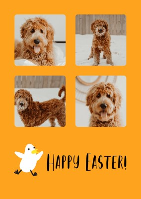 Happy Easter, happy chick in an orange background